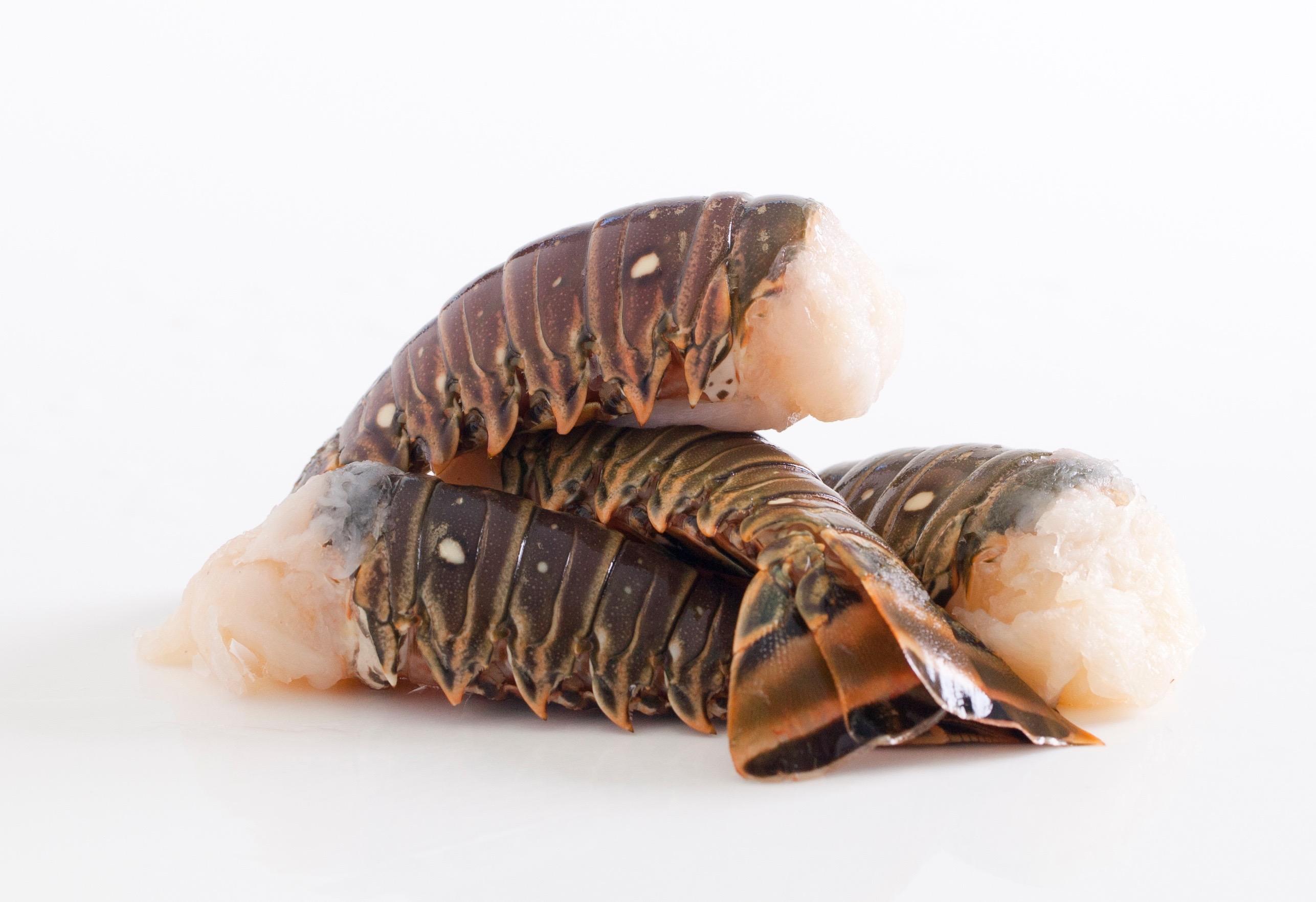 Lobster Tails - Jeannine Tan-1158 (2) copy (1)